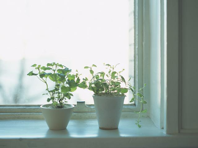 窓際に置かれた観葉植物
