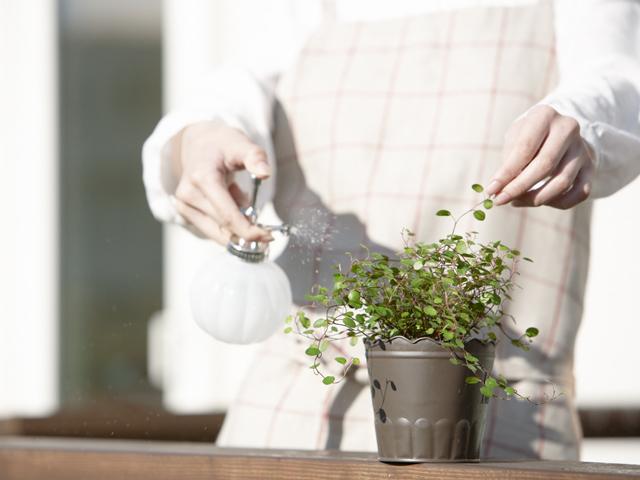 観葉植物のお手入れ