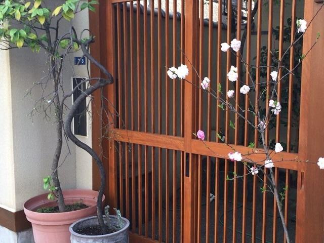 玄関外にある植物